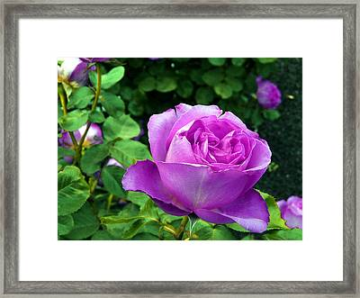 Purple Whisperings Framed Print by Kendall Eutemey