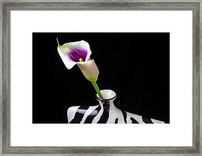 Purple White Calla In Vase Framed Print