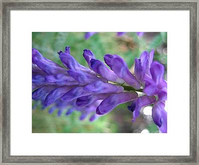 Purple Wildflower Framed Print by Melissa Parks