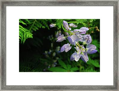 Framed Print featuring the photograph Purple Wildflower by Tikvah's Hope