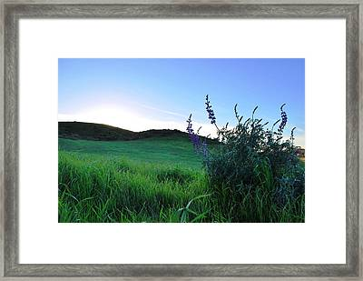 Framed Print featuring the photograph Purple Wildflowers In Beautiful Green Pastures by Matt Harang