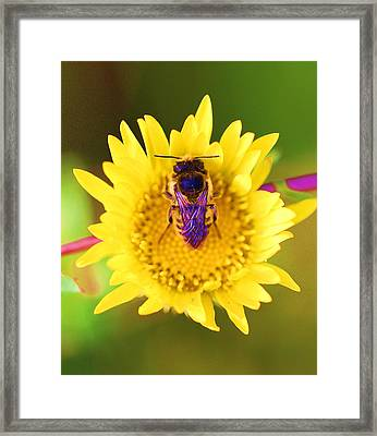Framed Print featuring the photograph Purple Wings by John King