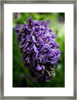 Purple Wisteria Framed Print