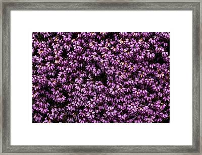 Purpleness Framed Print by John Gusky