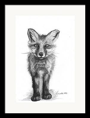 Grey Fox Framed Prints