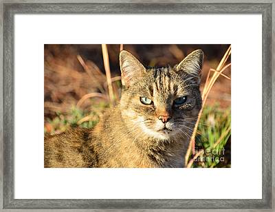 Purr-fect Kitty Cat Friend Framed Print