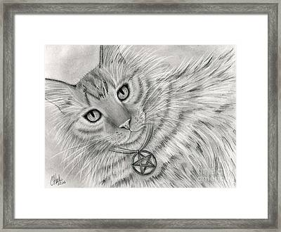 Framed Print featuring the drawing Purrfect Page Of Pentacles - Tarot Card Art by Carrie Hawks