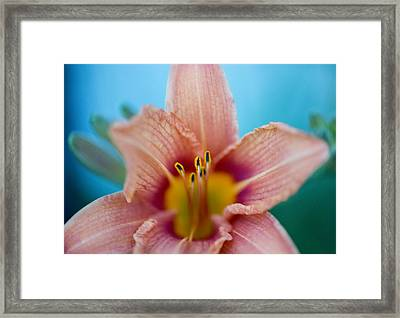 Purring Tiger - Lily Framed Print by Michael Wilcox