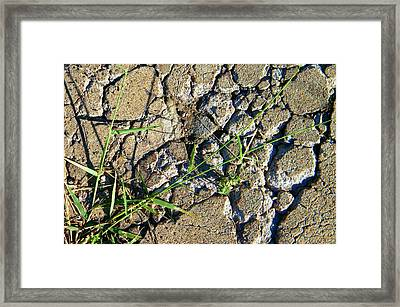 Pushing Through Concrete Framed Print by Lenore Senior