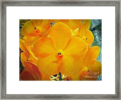 Put On A Happy Face Yellow Orchids Framed Print by Sue Melvin