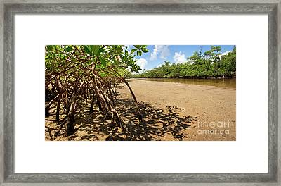 Putting Down Roots - Mangrove Coast In South Florida Framed Print