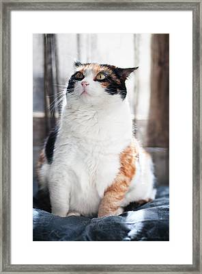 Framed Print featuring the photograph Puzzled by Laura Melis