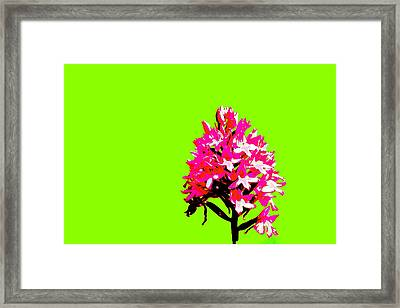 Green Pyramid Orchid Framed Print
