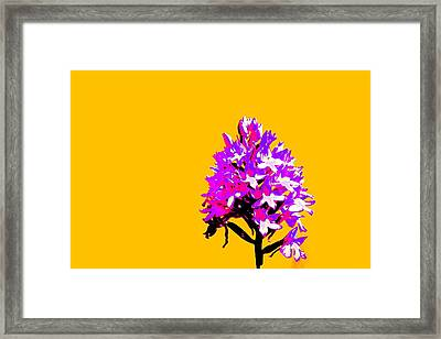 Orange Pyramid Orchid  Framed Print