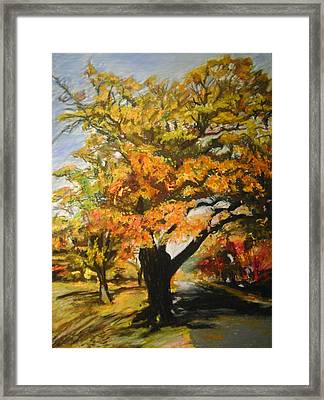 Quabbin Tree Framed Print by Therese Legere