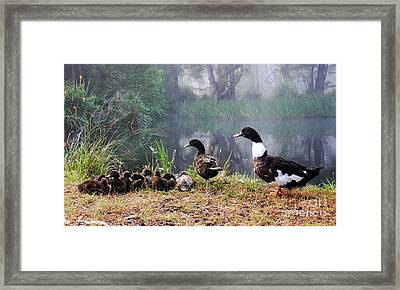 Quack Quack Ducks And A Pond Framed Print