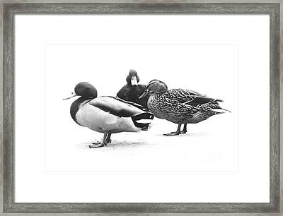 Quackers Framed Print by Michael Swanson