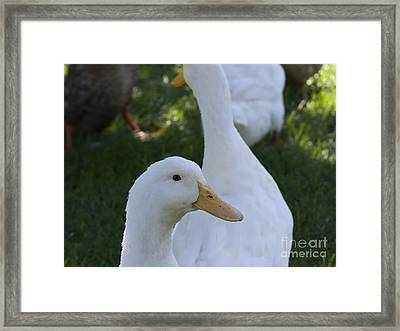 Quackers Framed Print