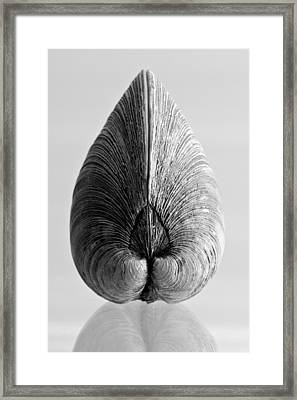 Quahog Number 1 Framed Print by Henry Krauzyk