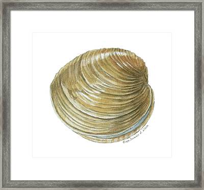 Quahog Shell Framed Print