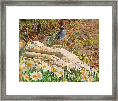 Quail And Daffies Framed Print by Donna Kennedy