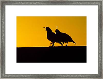 Quail At Sunset Framed Print