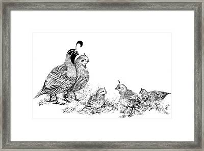 Quail Family Outing Framed Print