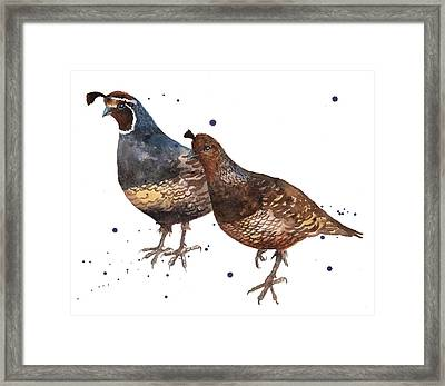 Quail Painting Framed Print by Alison Fennell