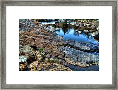 Quaker Ladies On The River Rocks Framed Print by David Patterson
