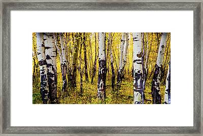 Quakies In Autumn Framed Print