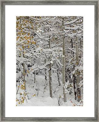Quakies In Early Winter Framed Print