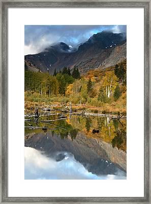 Quaking Aspen Forest Lundy Canyon Framed Print by Sebastian Kennerknecht