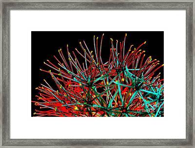 Quanapel Framed Print by Linda Vespasian