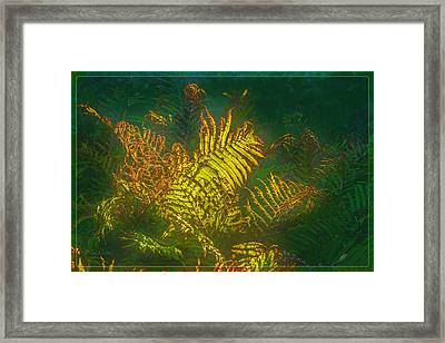 Quantum Fern.... Framed Print