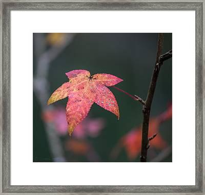 Quarry Leaf Framed Print