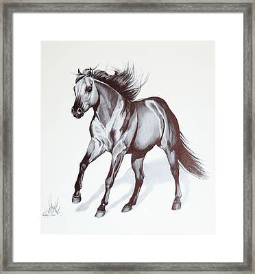 Quarter Horse At Lope Framed Print