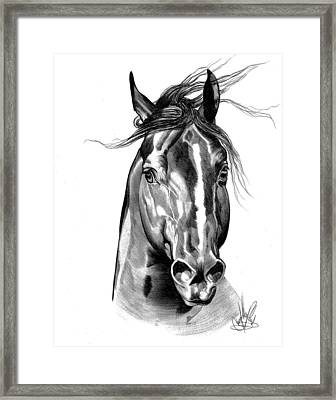 Quarter Horse Head Shot In Bic Pen Framed Print