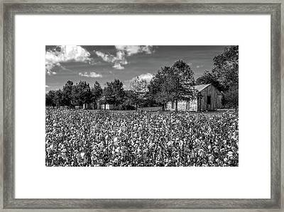 Quarters Viewed From Cotton Field At Frogmore Plantation  -  Bw Framed Print by Frank J Benz