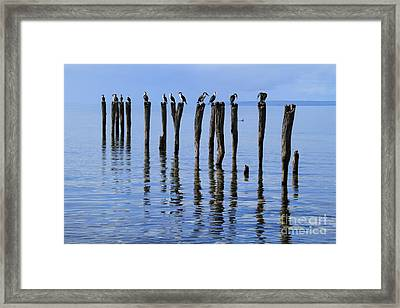 Framed Print featuring the photograph Quay Rest by Stephen Mitchell