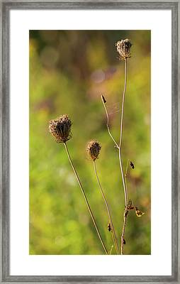 Queen Ann Autumn Framed Print by Bill Wakeley