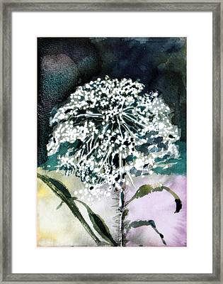 Queen Ann Lace Framed Print by Mindy Newman