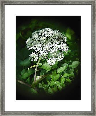 Queen Ann Lace Framed Print