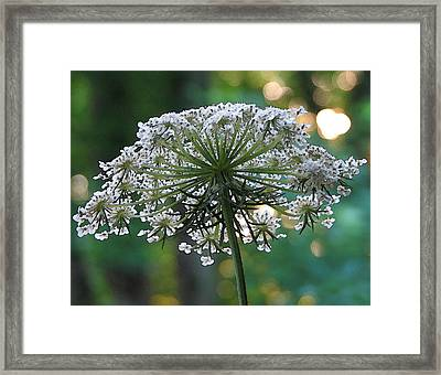 Queen Anne In Her Glory Framed Print by Ginger Howland