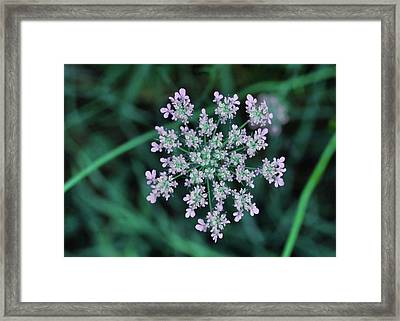 Queen Anne Framed Print by JAMART Photography