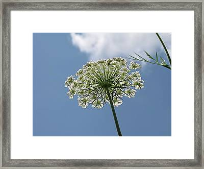 Queen Annes Geometry Framed Print by Shane Brumfield