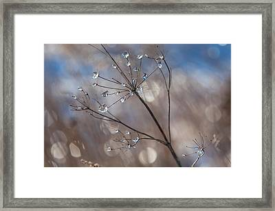 Queen Anne's Ice Framed Print