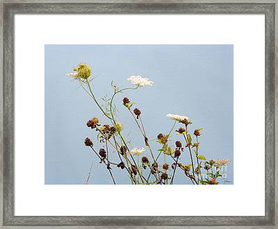 Queen Anne's Lace And Dried Clovers Framed Print by Lise Winne