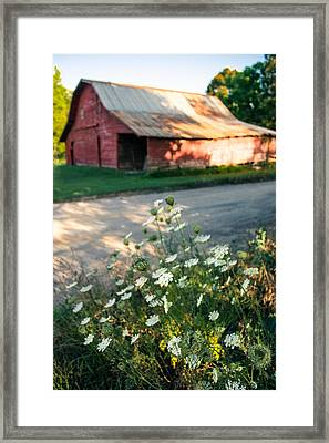 Queen Anne's Lace By The Barn Framed Print by Parker Cunningham