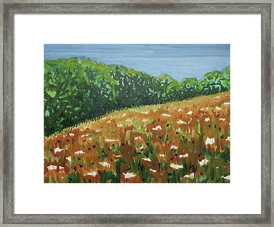 Queen Anne's Lace Field Framed Print by Bethany Lee