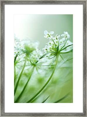 Framed Print featuring the photograph Queen Anne's Lace by Jane Melgaard